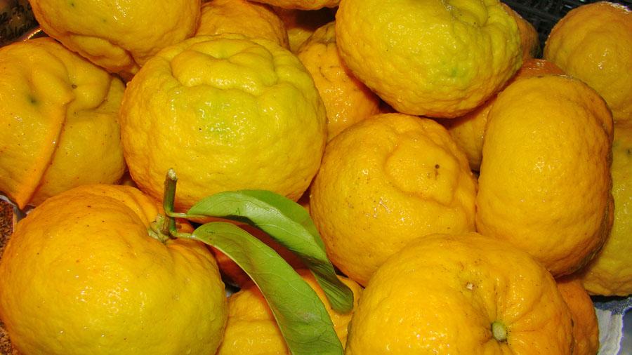 große gelbe Zitrusfrüchte