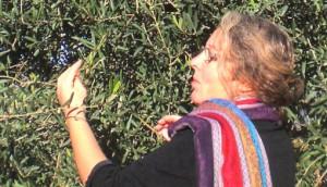 Claudia Harenberg sieht sich die Oliven an